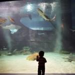 Child at shark tank in Cleveland Aquarium