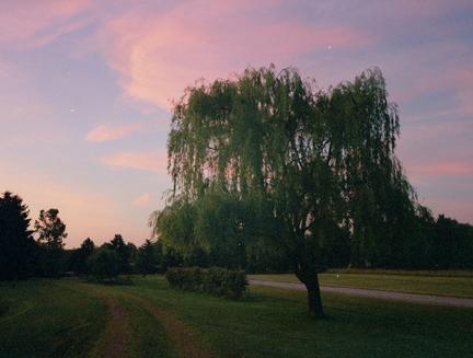 sloboda_willow_tree_1