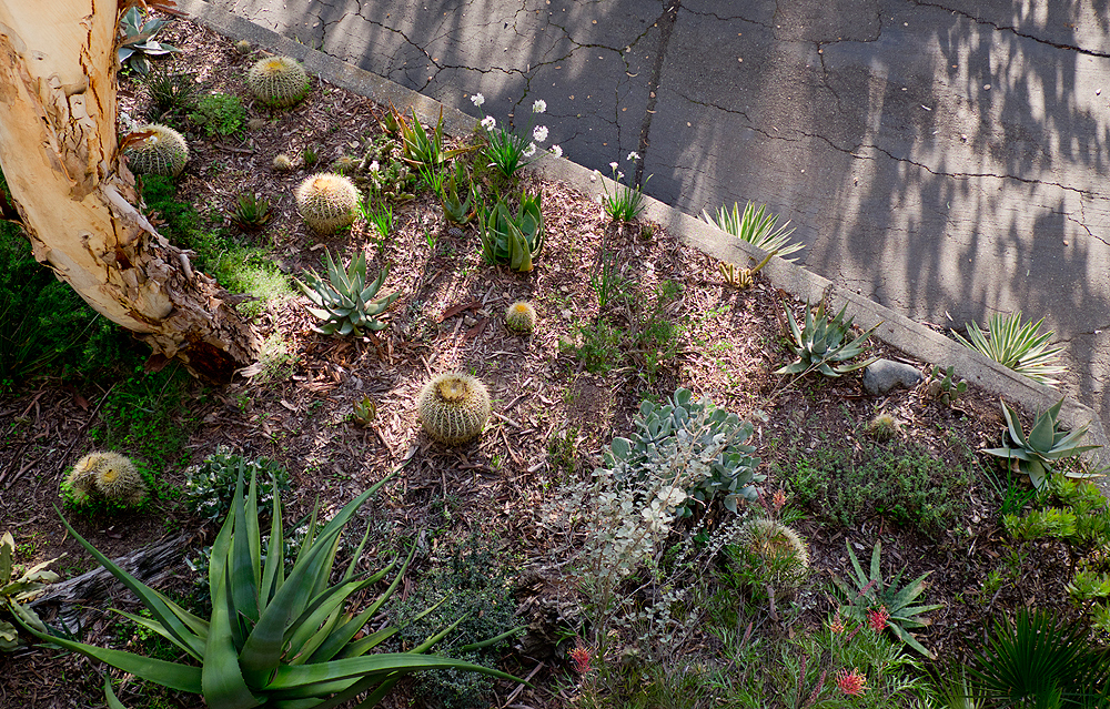 little happy things - landscape architecture oakland